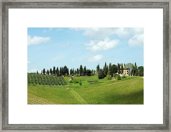 Old Farmhouse And Vineyard Landscape Framed Print