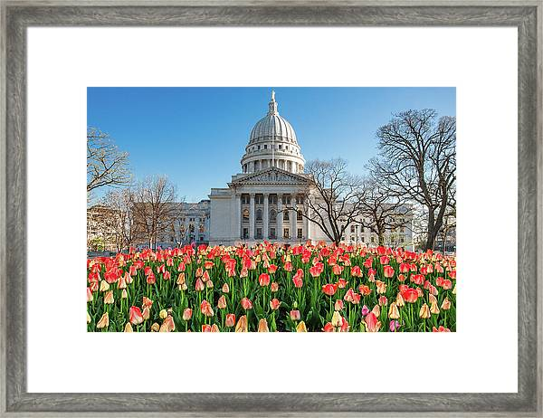 On A Bed Of Tulips Framed Print
