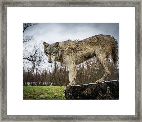 On A Slant Framed Print