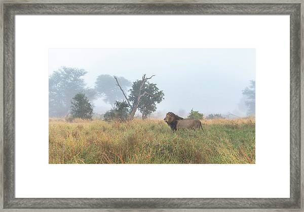 On The Hunt Framed Print