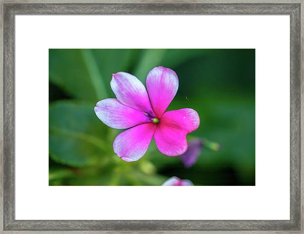 One For You Framed Print