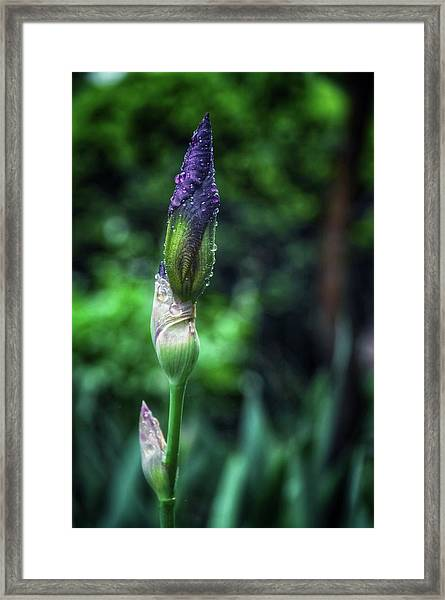 Open Soon Framed Print