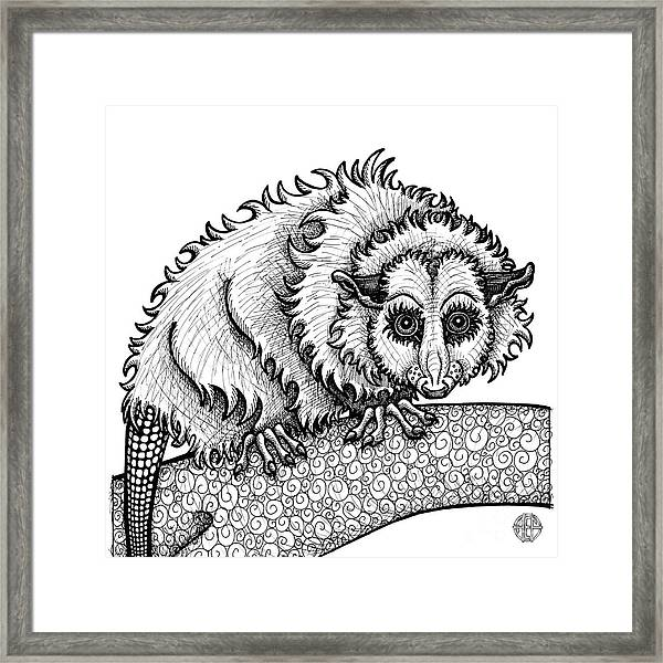 Framed Print featuring the drawing Opossum by Amy E Fraser