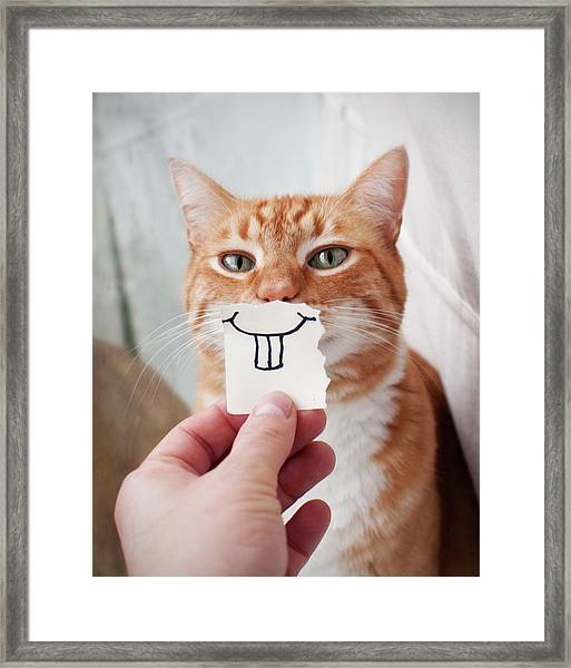Orange Cat Face Framed Print