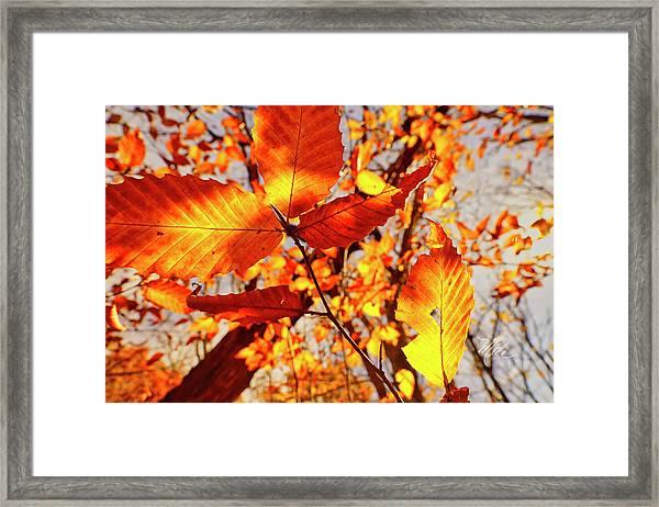 Orange Fall Leaves Framed Print