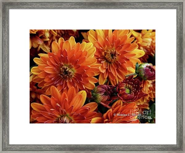 Orange Flowers No. 14 Framed Print