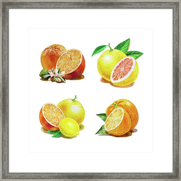 Orange Grapefruit Lemon Watercolor Fruit Illustration Framed Print