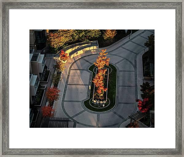 Orange Trees In Autumn Framed Print