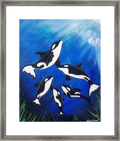 Orca Family  Framed Print