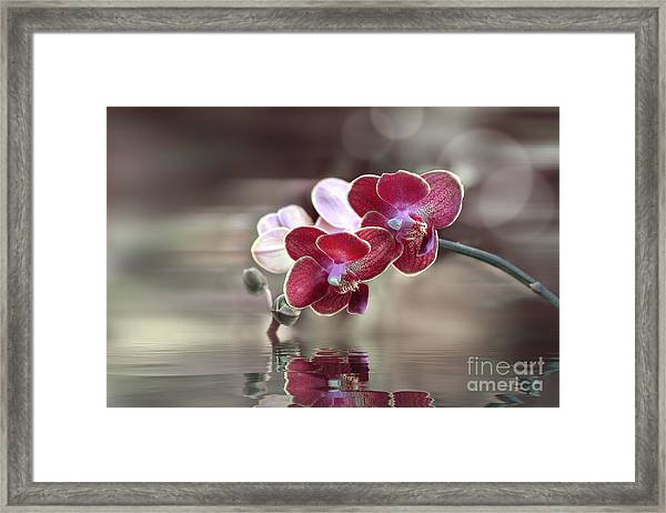 Orchid Reflection Framed Print