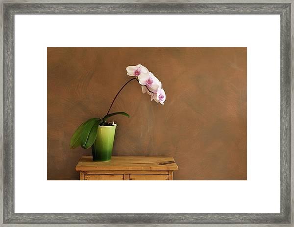 Orchid Still Life Hz Framed Print by Yinyang