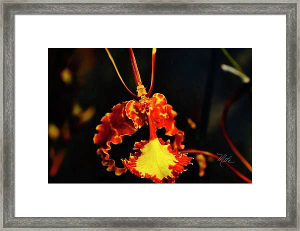 Orchid Study Four Framed Print