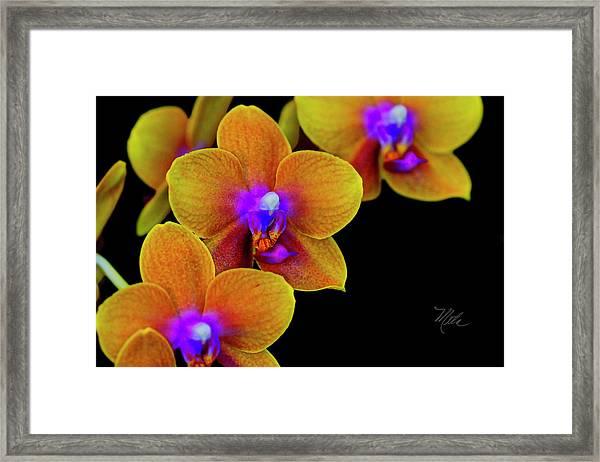 Orchid Study Ten Framed Print