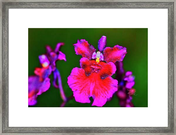 Orchid Study Three Framed Print