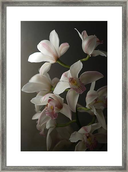 Orchids, Close-up Framed Print by Kate Connell
