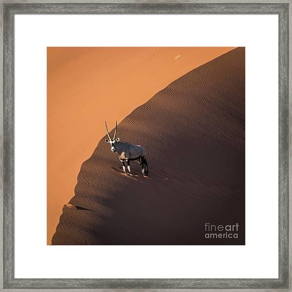 Oryx On The Edge, Namibia Framed Print