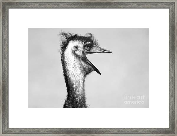 Ostrich With Mouth Open Framed Print