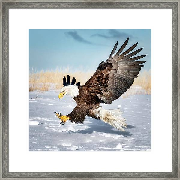 Outstretched Claws Framed Print