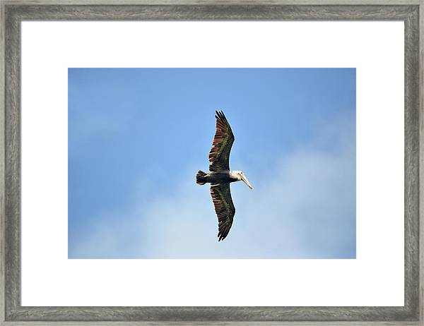 Overflight Framed Print