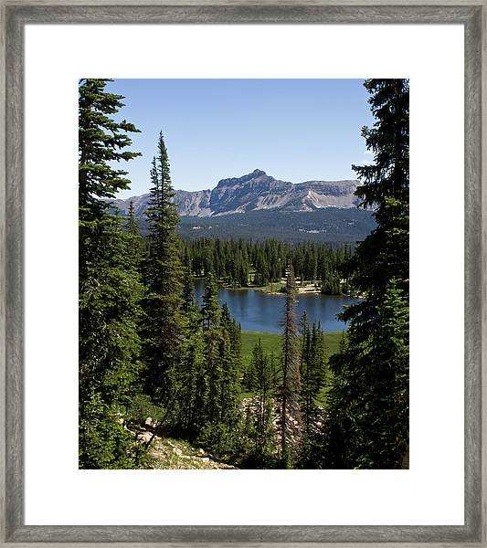 Overlooked Framed Print