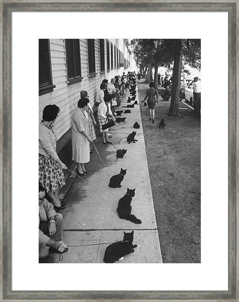 Owners With Their Black Cats, Waiting In Framed Print