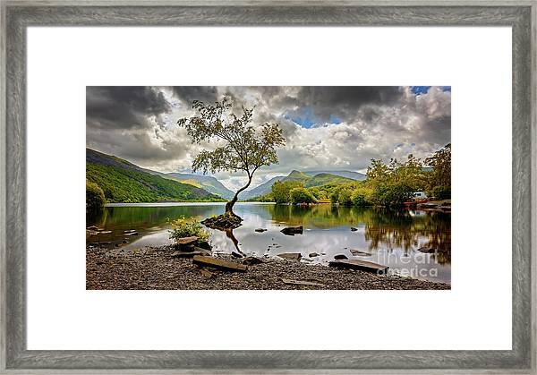 Padarn Lake Tree  Framed Print
