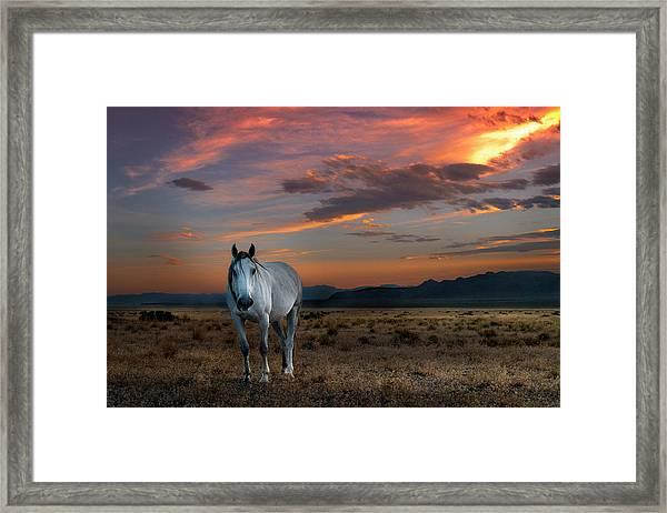 Pale Horse Framed Print