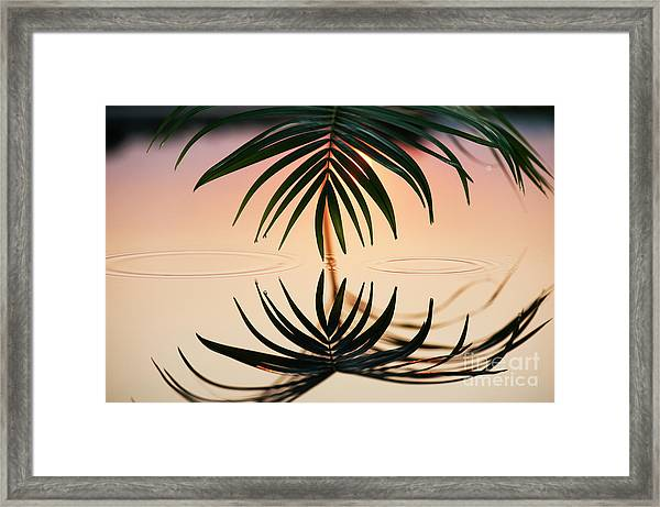 Palm Light Reflection Framed Print by Tim Gainey
