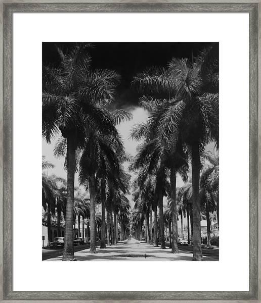 Palm Street Framed Print
