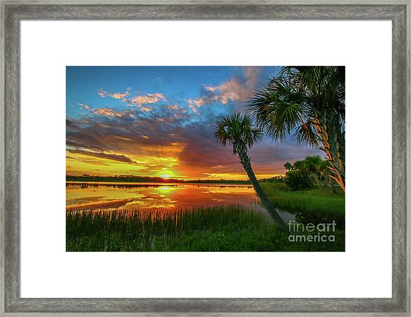 Framed Print featuring the photograph Palm Tree Sunset by Tom Claud