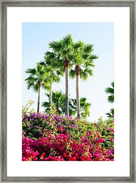 Palm Trees And Blooming Bougainvillea Framed Print