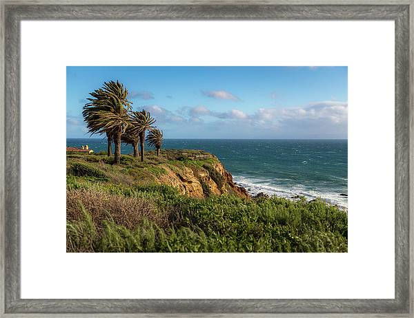 Palm Trees Blowing In The Wind Framed Print