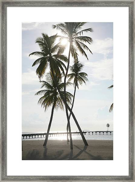 Palm Trees On A Beach Framed Print