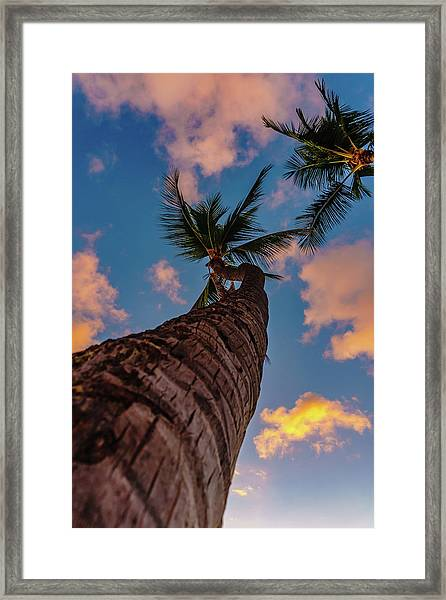 Palm Upward Framed Print