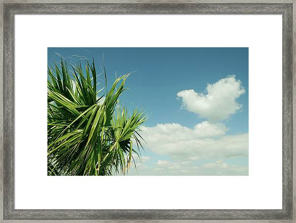 Palms And Clouds Framed Print