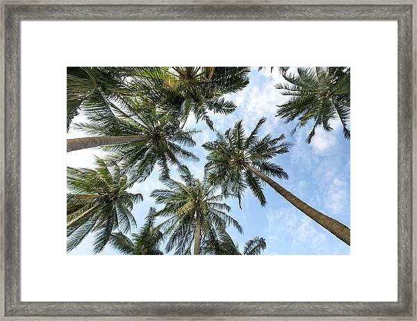Palms  Beach Framed Print