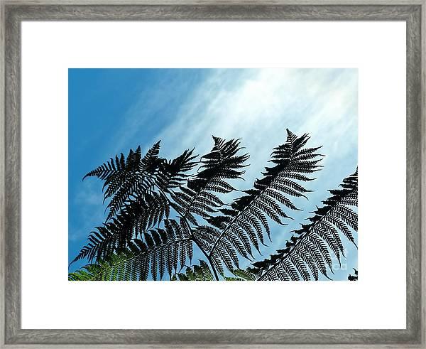 Palms Flying High Framed Print