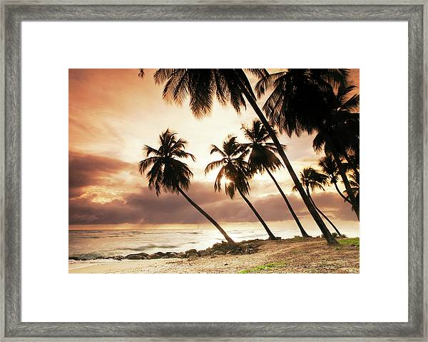 Palms On A Beach At Sunset Framed Print