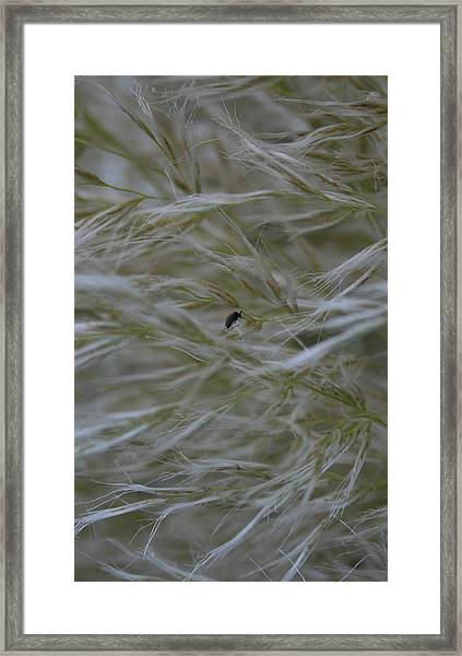 Pampas Grass And Insect Framed Print
