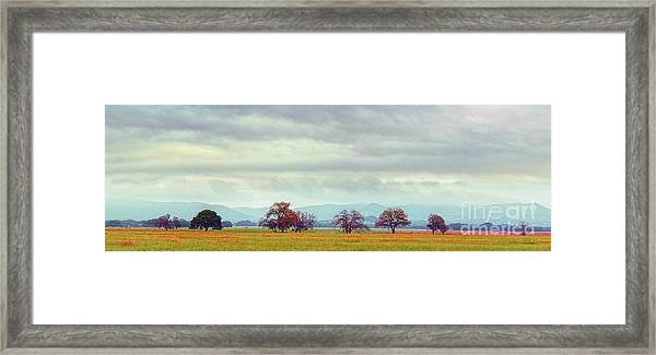 Panorama Of Lone Oaks Standing In A Prairie - Uvalde County Utopia Texas Hill Country Framed Print