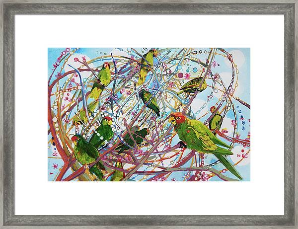Parrot Bramble Framed Print