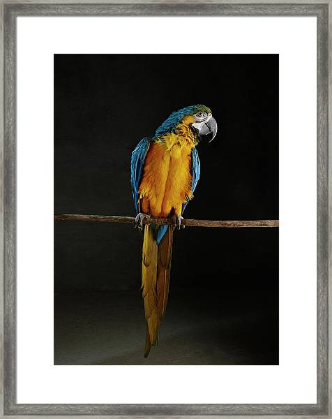Parrot Perched On Stick Framed Print