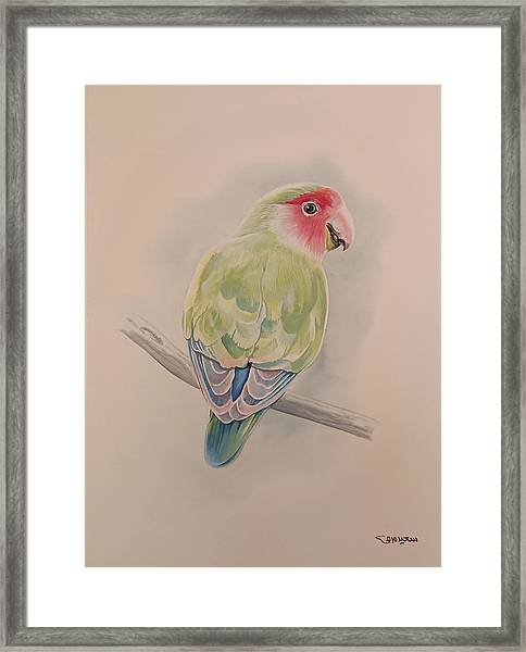 Framed Print featuring the painting Parrot by Said Marie