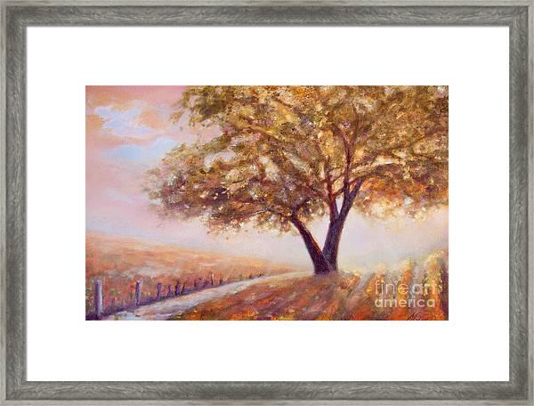 Paso Robles Oak Tree Framed Print