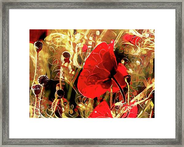 Passionate About Poppies Framed Print