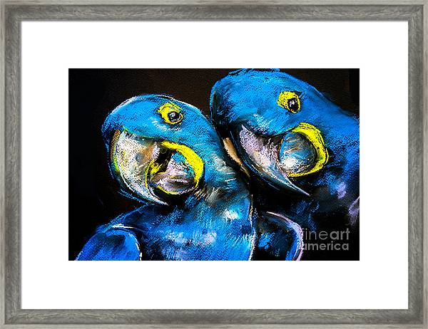 Pastel Painting Of A Blue Parrots On A Framed Print