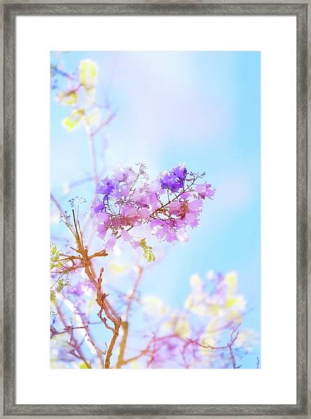Pastels In The Sky Framed Print