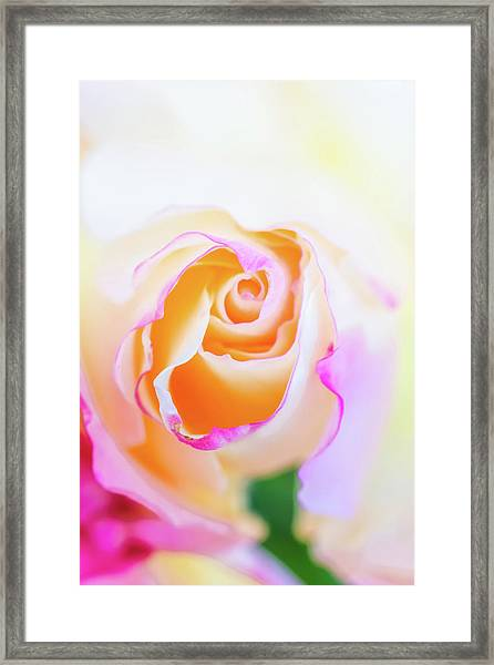 Pastels Framed Print