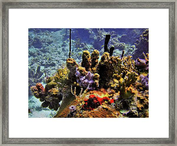 Patch Reef Bluff Framed Print