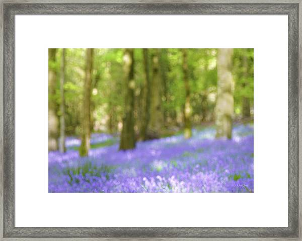 Pause Among The Bluebells Framed Print by Norma Slack